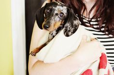 love you little doxie...
