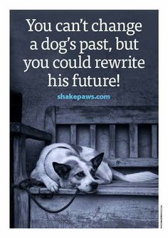 """You can't change a dog's past, but you could rewrite his future.""…"
