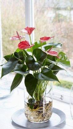 Water Plants Indoor, Indoor Flowers, House Plants Decor, Plant Decor, Decoration Plante, Inside Plants, Interior Plants, Hanging Plants, Container Gardening