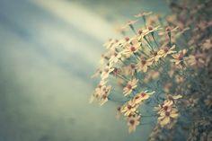 mykindafairytalee:      untitled by RazorBrown on Flickr.