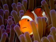 Top 10 Clown Fish Facts