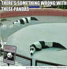 The Zoo in China, something seems off.