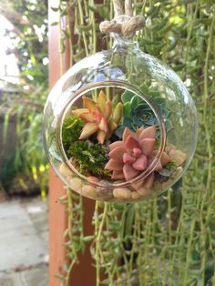 Hey, I found this really awesome Etsy listing at https://www.etsy.com/listing/470862596/hanging-terrariumsucculent