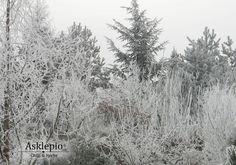 Winter fairytale in my garden.