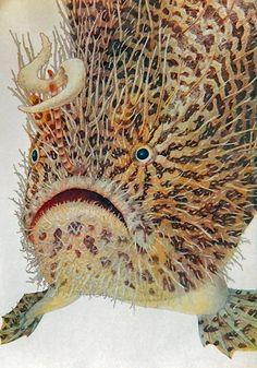 EXOTIC FISH   fullpage vintage  illustration by DustyDiggerLise, $5.00