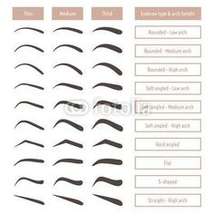Various types of eyebrows. Classic type and other. Various types of eyebrows. Classic type and other. Vector illustration with different thickness of brows. Makeup tips. Types Of Eyebrows, Thick Eyebrows, Straight Brows, Eye Brows, Shape Eyebrows, Gel Eyeliner, Arched Eyebrows, Types Of Eyes, Makeup Tricks
