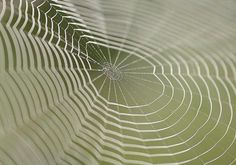 Spider Web by Mike Moats