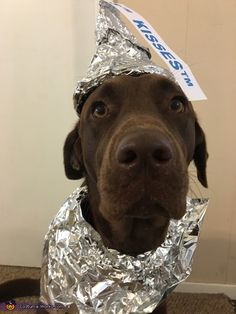 Chocolate Lab as a Chocolate Kiss Costume - Halloween Costume Contest Kiss Halloween Costumes, Dog Costumes For Kids, Funny Costumes, Creative Halloween Costumes, Kid Costumes, Children Costumes, Halloween Halloween, Vintage Halloween, Costumes For Women