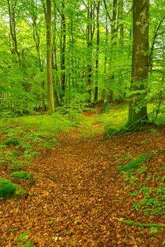 I denna skog vill jag gifta mig.  Osbecks naturreservat i Laholm