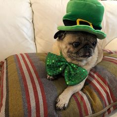 Happy St. Patrick's Day ☘️ Unlike the other furry friends in my building, I have decided to abstain from my typical St. Patrick's Day shenanigans this year. Yes, you heard right, this party pug isn't going to be caught shaking her shamrocks till 2 in the morning like last year! If you are home too, check out my latest blog, Momo Monday: Greener Guidelines!