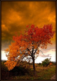 ✯ Bulgarien - Autumn Tree