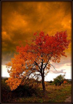 ✯ Bulgarien - Autumn Tree