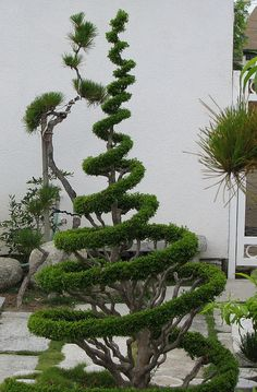 enjoy collection garden styles and let us know your thoughts about these garden design ideas. Topiary Garden, Bonsai Garden, Garden Trees, Garden Art, Garden Design, Garden Plants, Landscape Design, Unique Gardens, Small Gardens