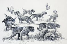 Print Hunting with German Wirehaired Pointer by Valery Siurha gwp gwp pointer dog art gwp poi Gsp Puppies, Pointer Puppies, Pointer Dog, Deer Drawing Easy, Easy Drawings, Hunting Art, Hunting Dogs, German Wirehaired Pointer, Wire Haired Dachshund