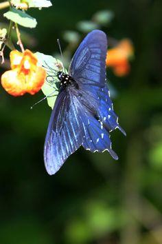 Butterfly at the MIll.  Gatlinburg, TN.  Photo taken by Pam Staples, www.sunnygirlscraps.com