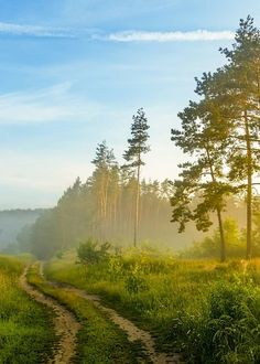 Field road on a misty morning Belarus Travel Destinations Nature Pictures, Cool Pictures, Beautiful Pictures, City Landscape, Landscape Paintings, Abstract Landscape, Landscape Photography Tips, Nature Photography, Beautiful World