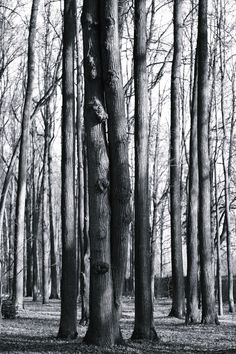 wood love - null