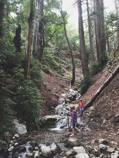 Seeing eye to eye with ancient redwoods at Los Padres National Forest #FamilyTrails