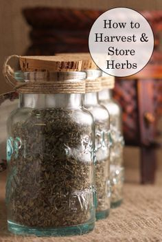 """Herb Gardening Learn how to properly harvest and store herbs and you'll be able to add some natural """"spice"""" to your recipes year round. - Learn how to properly harvest and store herbs and you'll be able to add some natural zest to your recipes year round. Food Storage, Storage Ideas, Herbal Remedies, Natural Remedies, Agriculture, Natural Spice, Healing Herbs, Growing Herbs, Medicinal Plants"""