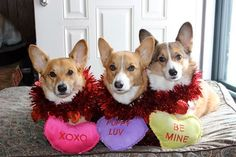 Hudson, Jammer, Brodie and 19 other #Corgis Want You To Be Their VALENTINE! http://sulia.com/channel/valentine-s-day/f/f682b1ed-ede9-489d-aabb-28d64c2cc4b6/?source=pin&action=share&btn=small&form_factor=desktop&pinner=125997393