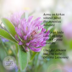 Aamu on kirkas väkevä päivä ilta punastuu ikävästä Matka on laulu Lähtö on lahja Kiitos kirpoaa askelista Unet jää jälkeeni kukkina tielle (Maaria Leinonen) Finnish Words, Poems, Prayers, Wisdom, Quotes, Flowers, People, Quotations, Poetry