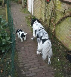 Discovering the garden with my big friend... Jelle and Storm