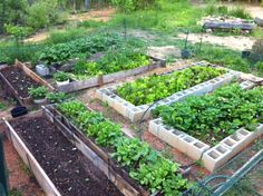 We love seeing success stories from our Urban Gardeners. This particular plot is incredibly spectacular!