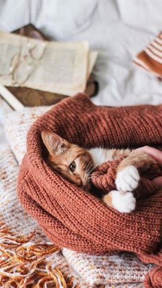 Kittens Cutest, Cats And Kittens, Cute Cats, Cute Cat Wallpaper, Fall Wallpaper, Animal Wallpaper, Toxic Plants For Cats, Pet Travel Carrier, Cat Aesthetic