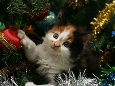 10 Tips to Cat-Proof Your Christmas Tree, Dog, Cat and other Pet Friendly Travel Articles