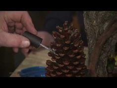 Carter Germain, Mountain Lake PBS engineer,  has discovered he has a knack for creating fantasy playhouses made from the forests of the Adirondacks. This is part two of the detailed demonstration video on how Carter creates his fairy houses.