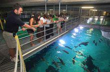 L'Oceanogràfic - Ciudad de las Artes y las Ciencias - Valencia, Spain -- The largest aquarium in all of Europe