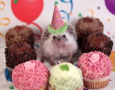 One Real Adventure by the Cutest Little Hedgehog You Have Ever Seen