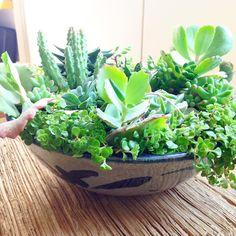 A bacia de cerâmica ganhou vida!  #suculentasycactus #suculovers #suculentas #decoração #ceramica #oitominhocas