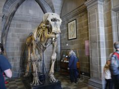 Elephant Skeleton at the University of Edinburgh Anatomy Museum and Lecture Theatre (c) Gillian McDonald