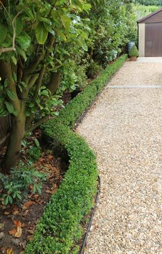 Long gravel driveway and box hedging