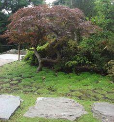 Japanese Garden Inspiration For Your Backyards Japanesegardentheme Japanese Garden Plants Japanese Garden Landscaping Inspiration
