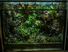 beautiful dart frog viv