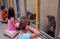 Um abrigo dos EUA criou um programa interessante para ajudar a aumentar a adoção de animais. É um programa em que crianças leem histórias para os cachorrinhos presos nas gaiolas. Além de praticarem a leitura, elas ajudam os cães do abrigo aaprender a conviver com. Leia Mais