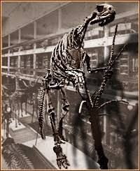 Image result for academy of natural sciences philadelphia