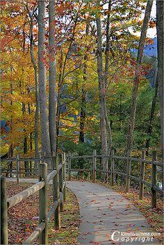 Pathway, Unicoi State Park, Georgia