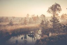 Misty swamp river at Teijo