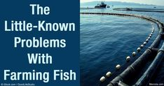 The Dangers of Fish Farming to Ecosystem and Your Health