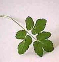 planten Plant Leaves