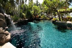 Pool #Pool #TropicalGarden #Perfect #PicturePleaseInsertYourselfIntoMyBackyardNow