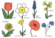 Museum Cards - Bloemen van Dick Bruna