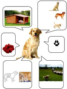 (2016-01) Hund Farm Activities, Animal Activities, Preschool Themes, Infant Activities, Animal Crafts For Kids, Animal Projects, Farm Animals, Animals And Pets, Farm Unit