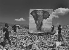 To highlight human destruction of animal habitats in East Africa, photographer Nick Brandt shot giant panoramas of life-size animal prints in their former