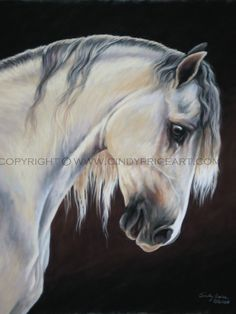 White gray Andalusian Horse print of original by cindypriceart