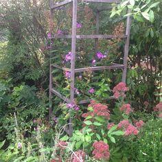 Redwine Floral!