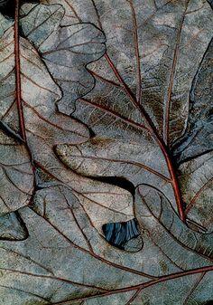 Winter Swamp Leaves